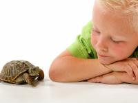 """Онлайн-клуб для родителей «Учимся вместе». Статья """"Что делать, если ребенок медлительный?"""""""